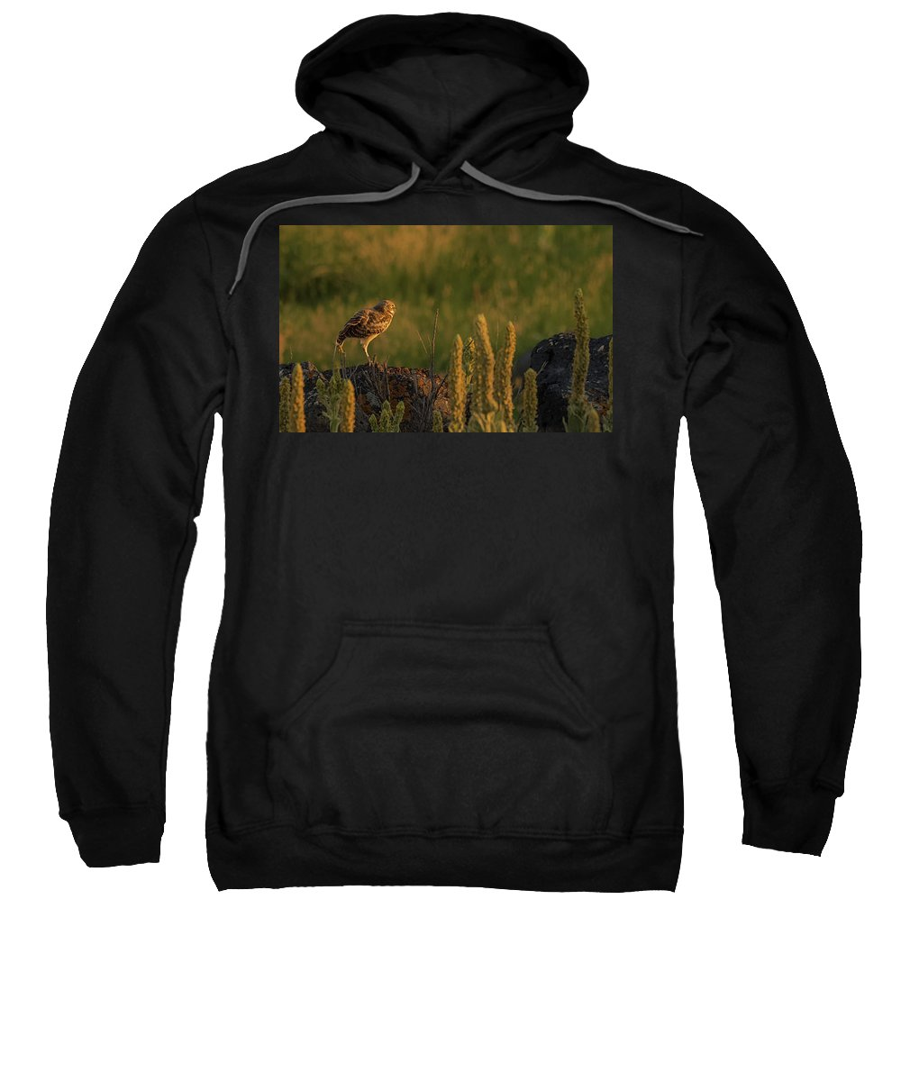 Owl Sweatshirt featuring the photograph Owl Dancing At Dusk by Yeates Photography