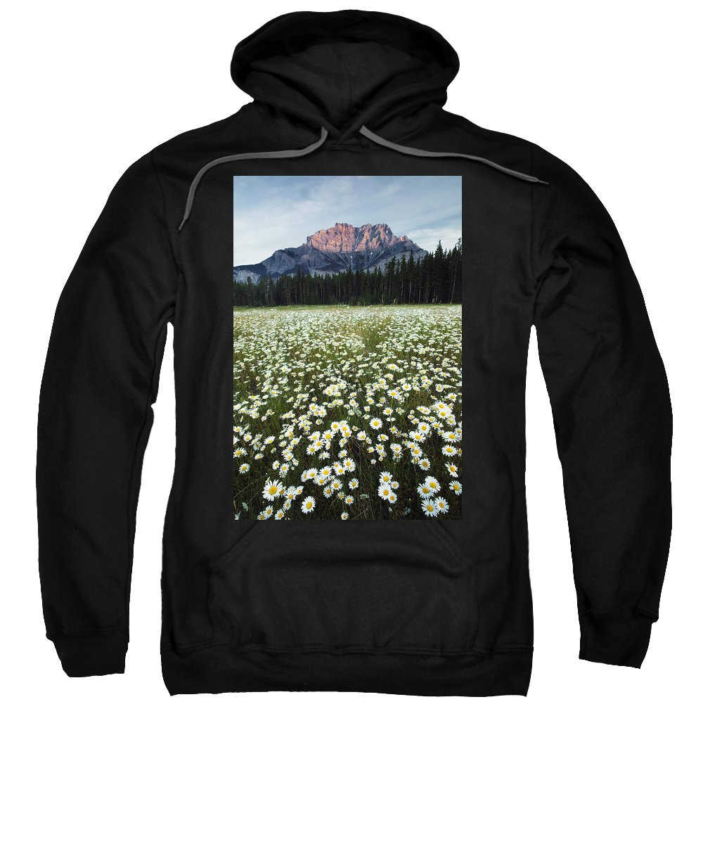 Light Sweatshirt featuring the photograph Ox-eyed Daisies And Cascade Mountain by Darwin Wiggett
