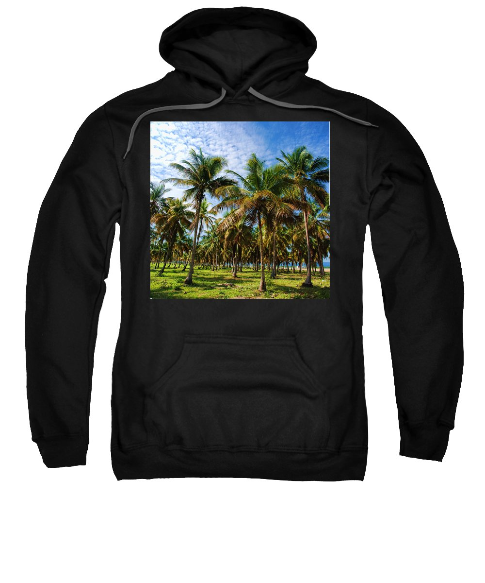Palms Sweatshirt featuring the photograph Palms And Sky by Galeria Trompiz