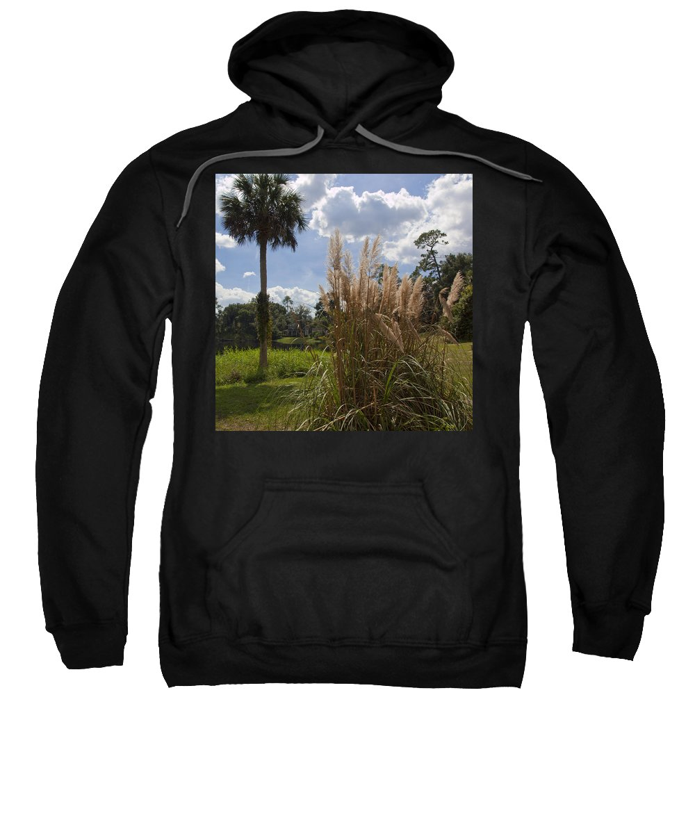 Pampas Sweatshirt featuring the photograph Pampas Grass Cortaderia Selloana At Spirit Pond by Allan Hughes