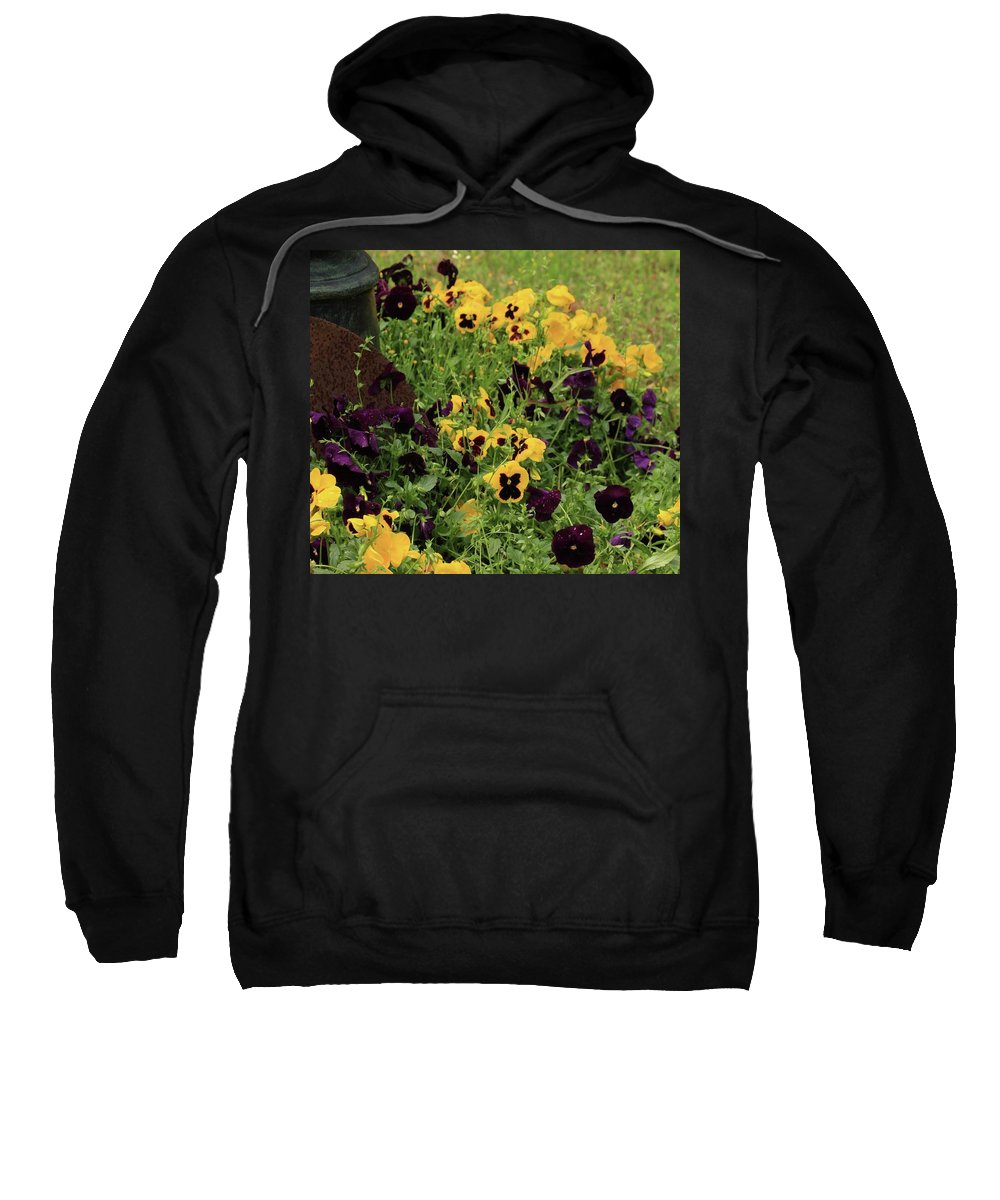 Pansies Sweatshirt featuring the photograph Pansies by Kim Henderson