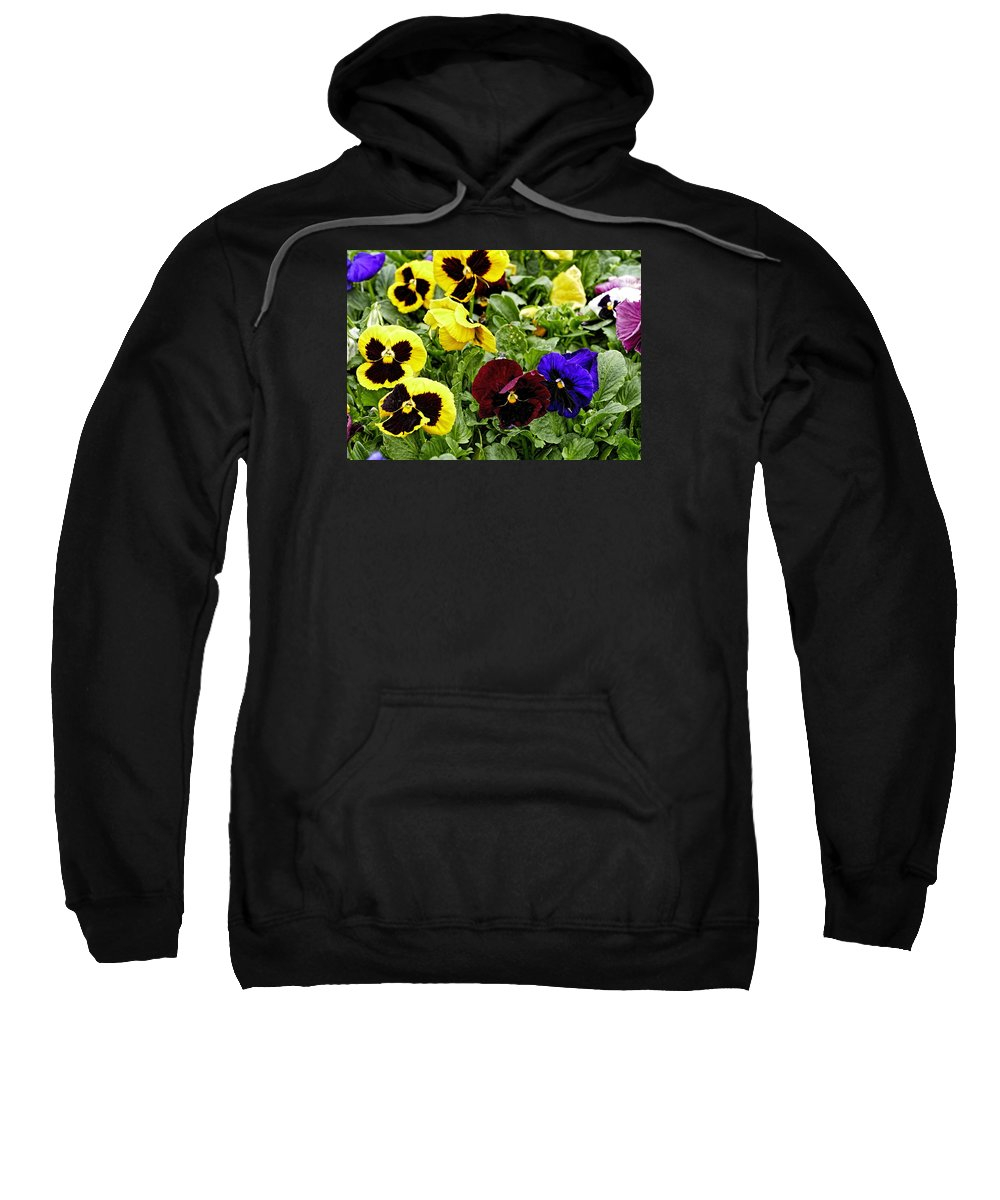 Pansy Sweatshirt featuring the photograph Pansies Of A Different Color by Richard Belcastro