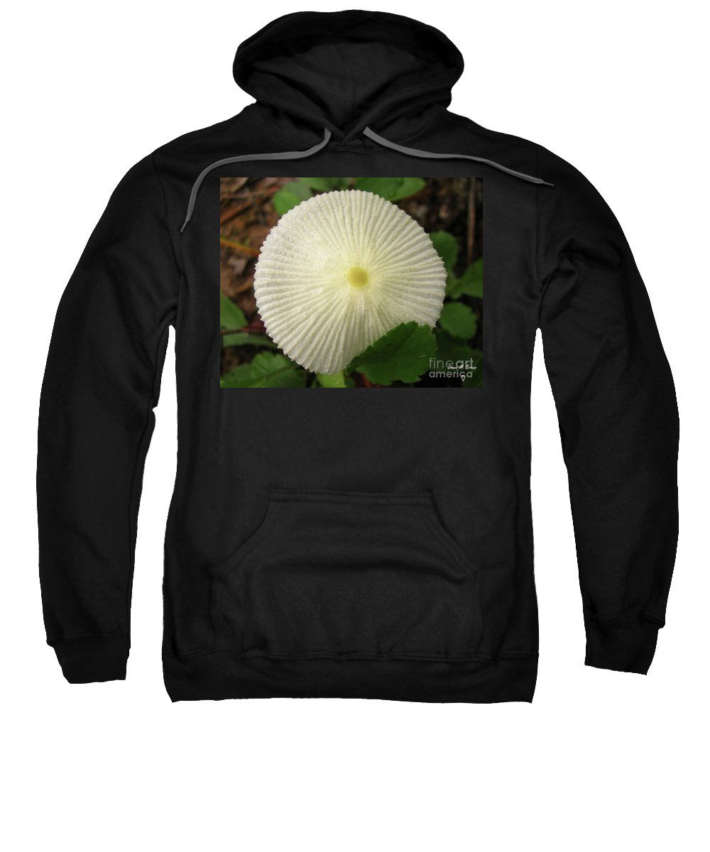 Mushroom Sweatshirt featuring the photograph Parasol Mushroom by Donna Brown