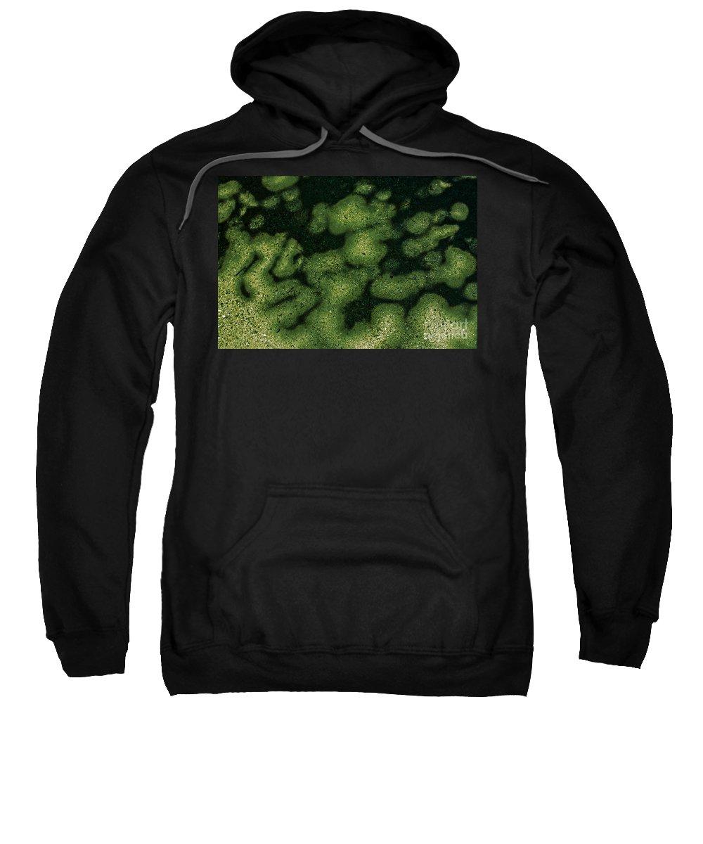 Botanic Garden Sweatshirt featuring the photograph Parrotia Persica by Casper Cammeraat