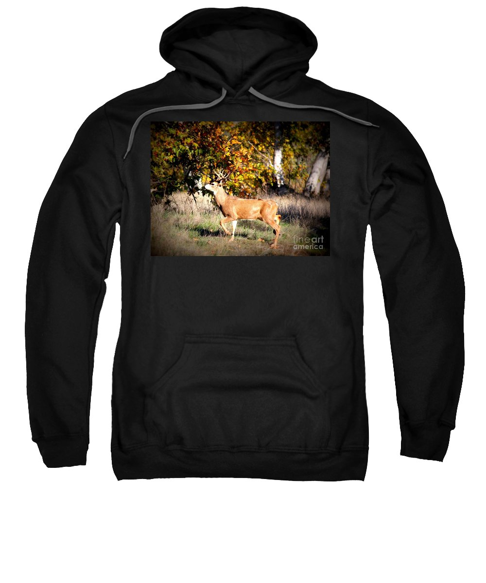 Animal Sweatshirt featuring the photograph Passing Buck In Autumn Field by Carol Groenen