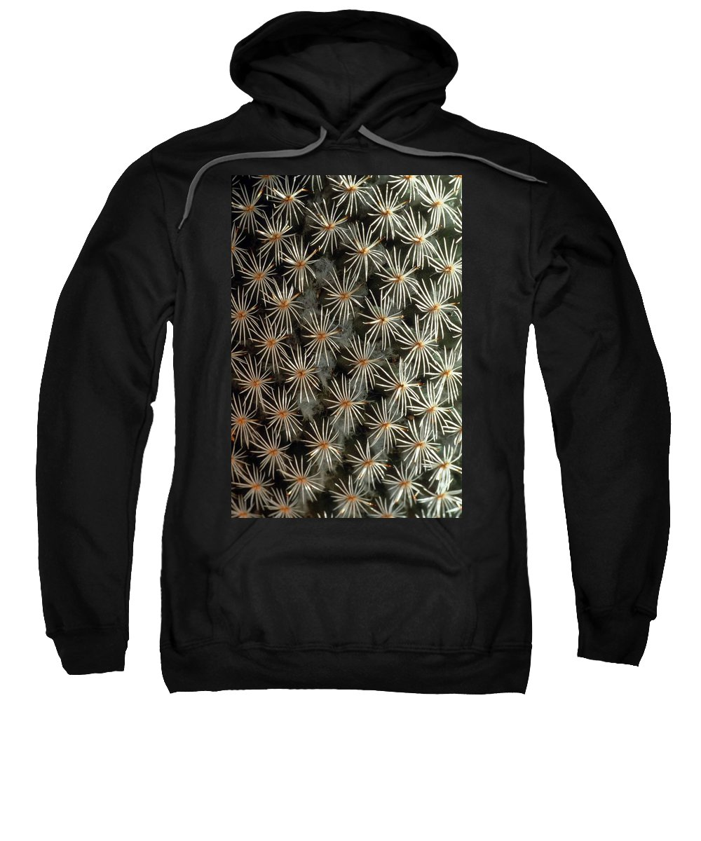 Cactus Sweatshirt featuring the photograph Patterns In Light And Dark by Laurie Paci