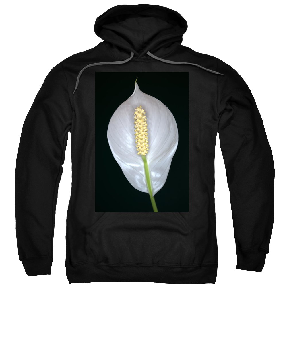 Peace Lily Sweatshirt featuring the photograph Peace Lily In Flower. by Chris Day