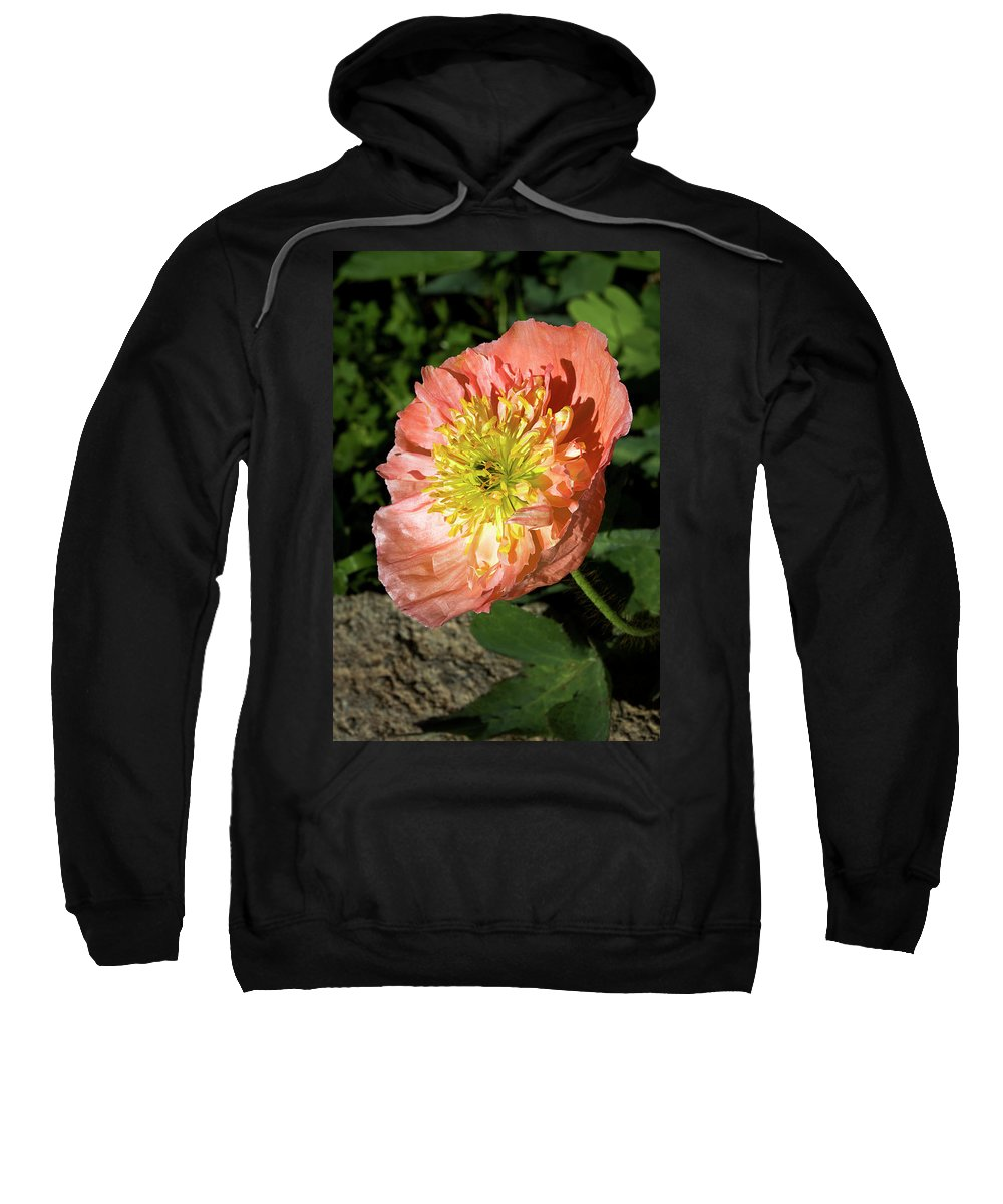 Poppy Sweatshirt featuring the photograph Peach Colored Poppy by Phyllis Denton