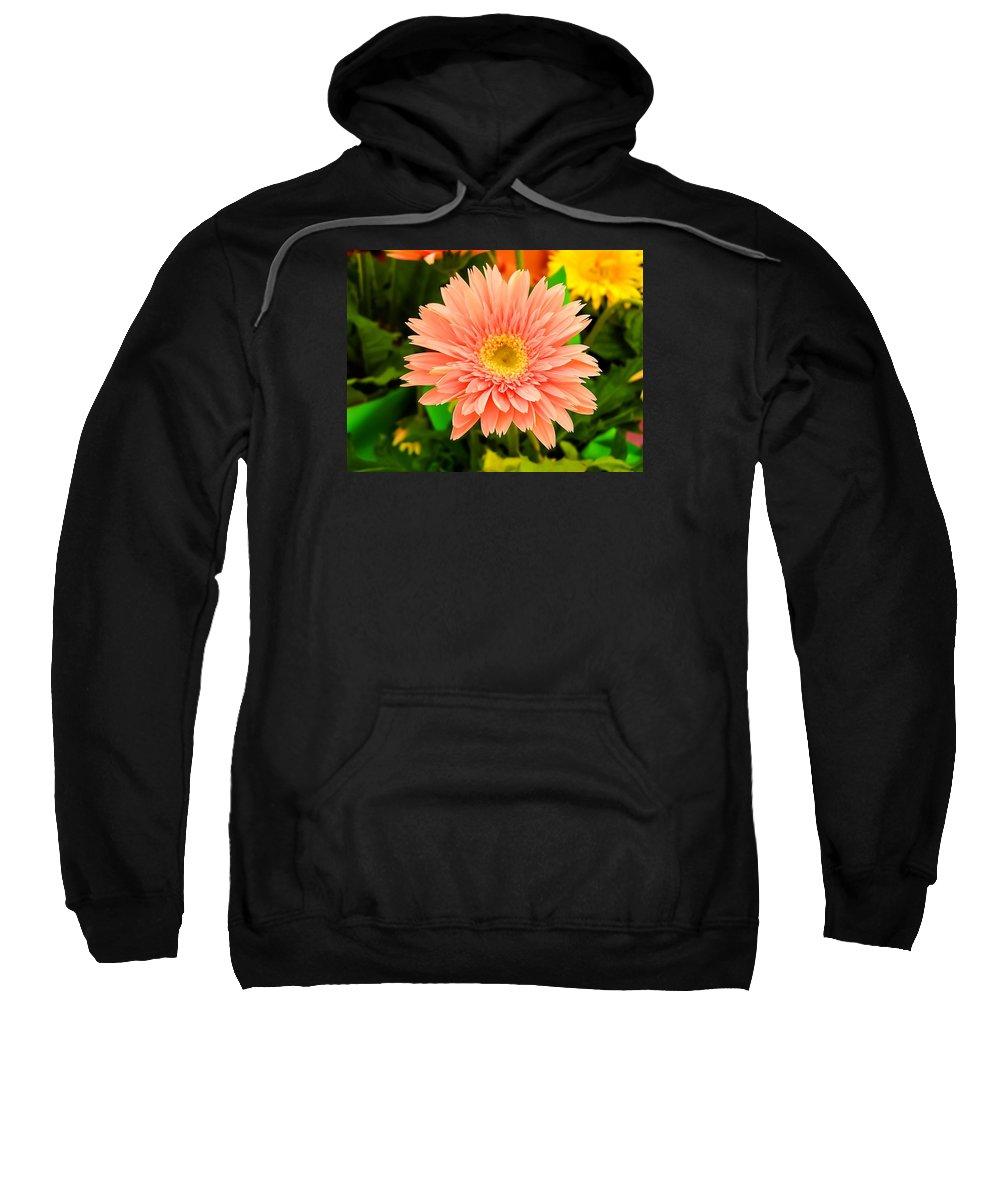 Peach Gerbera Sweatshirt featuring the photograph Peach Gerbera Daisy by Cynthia Woods