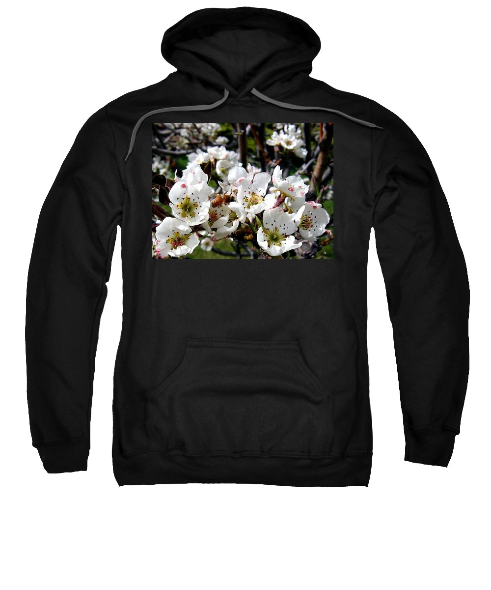 Blossoms Sweatshirt featuring the photograph Pear Blossoms And Bee by Will Borden