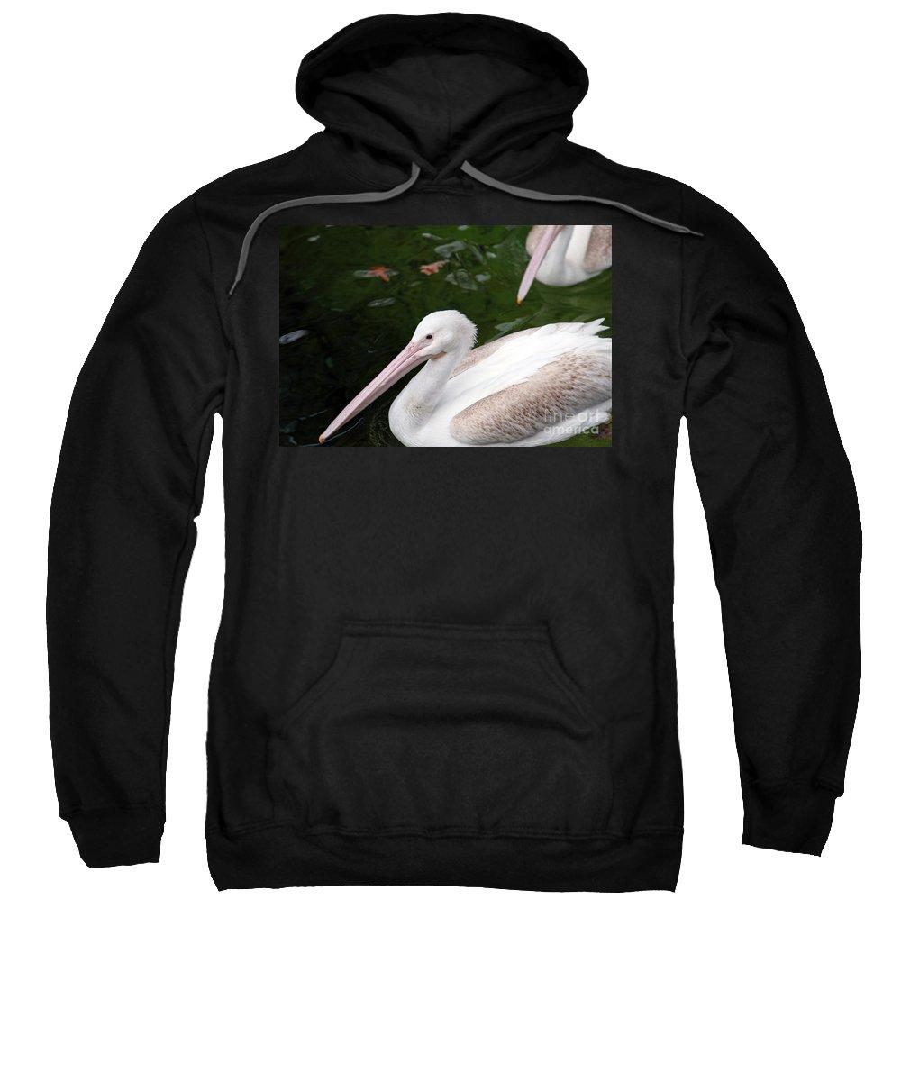 Pelican Sweatshirt featuring the photograph Pelican by Amanda Barcon