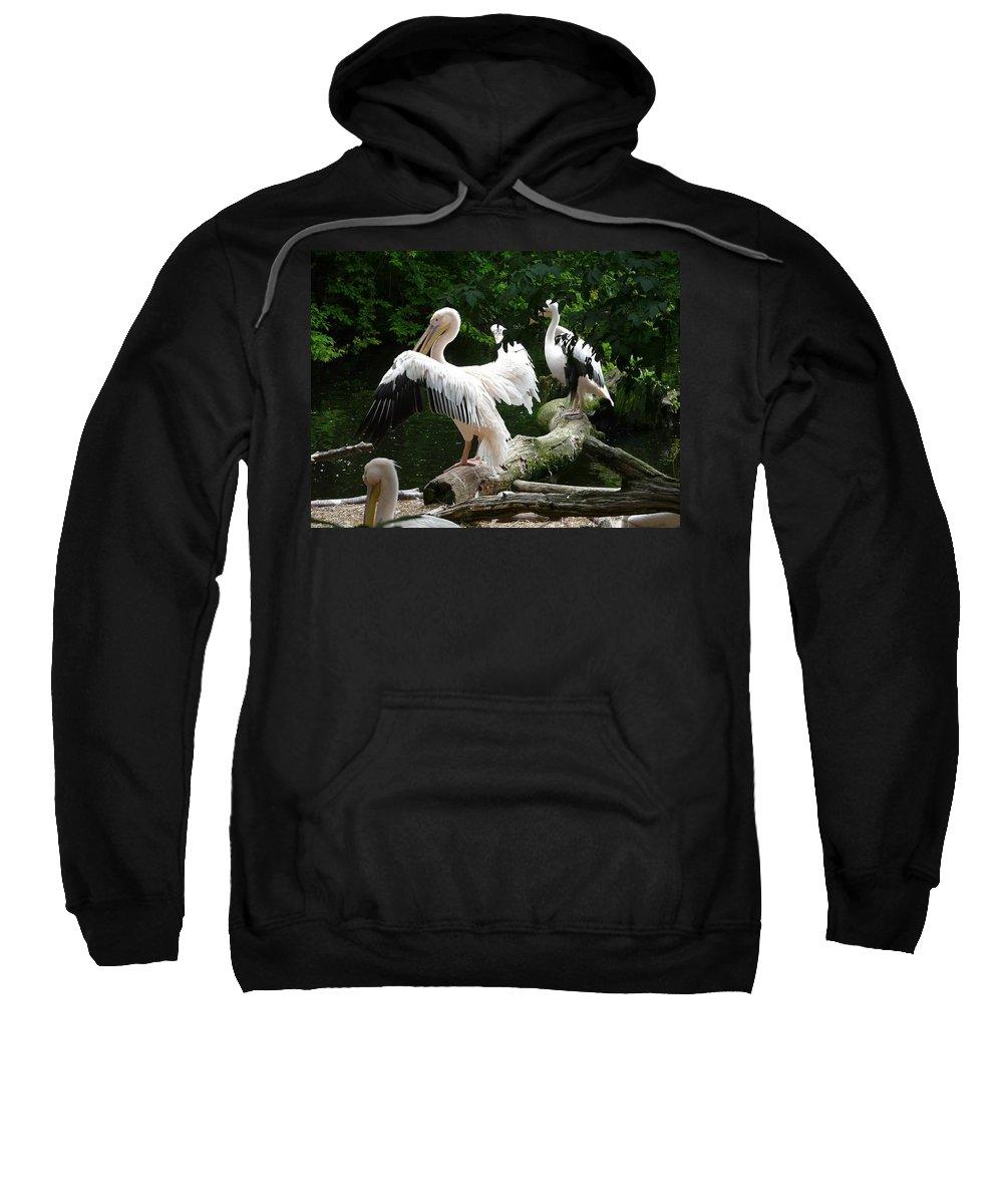 Bird Sweatshirt featuring the photograph Pelican Hideaway by Valerie Ornstein