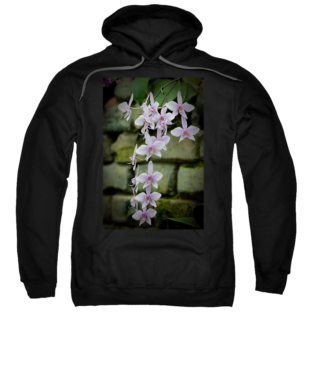 Orchids Sweatshirt featuring the photograph Phalaenopsis Orchid 2 by Michael Cummings
