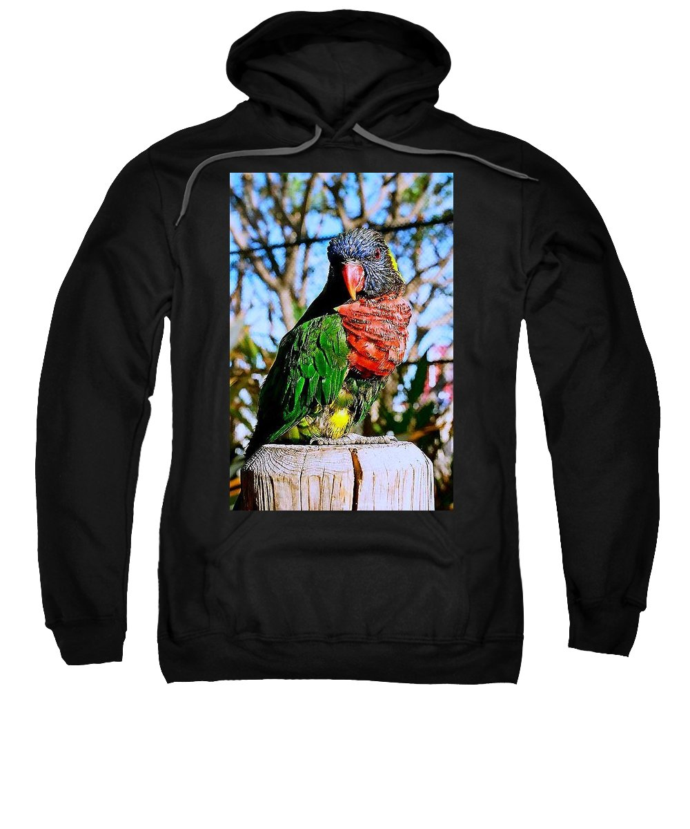 Bird Sweatshirt featuring the photograph Pillar Perch by Stephanie Haertling