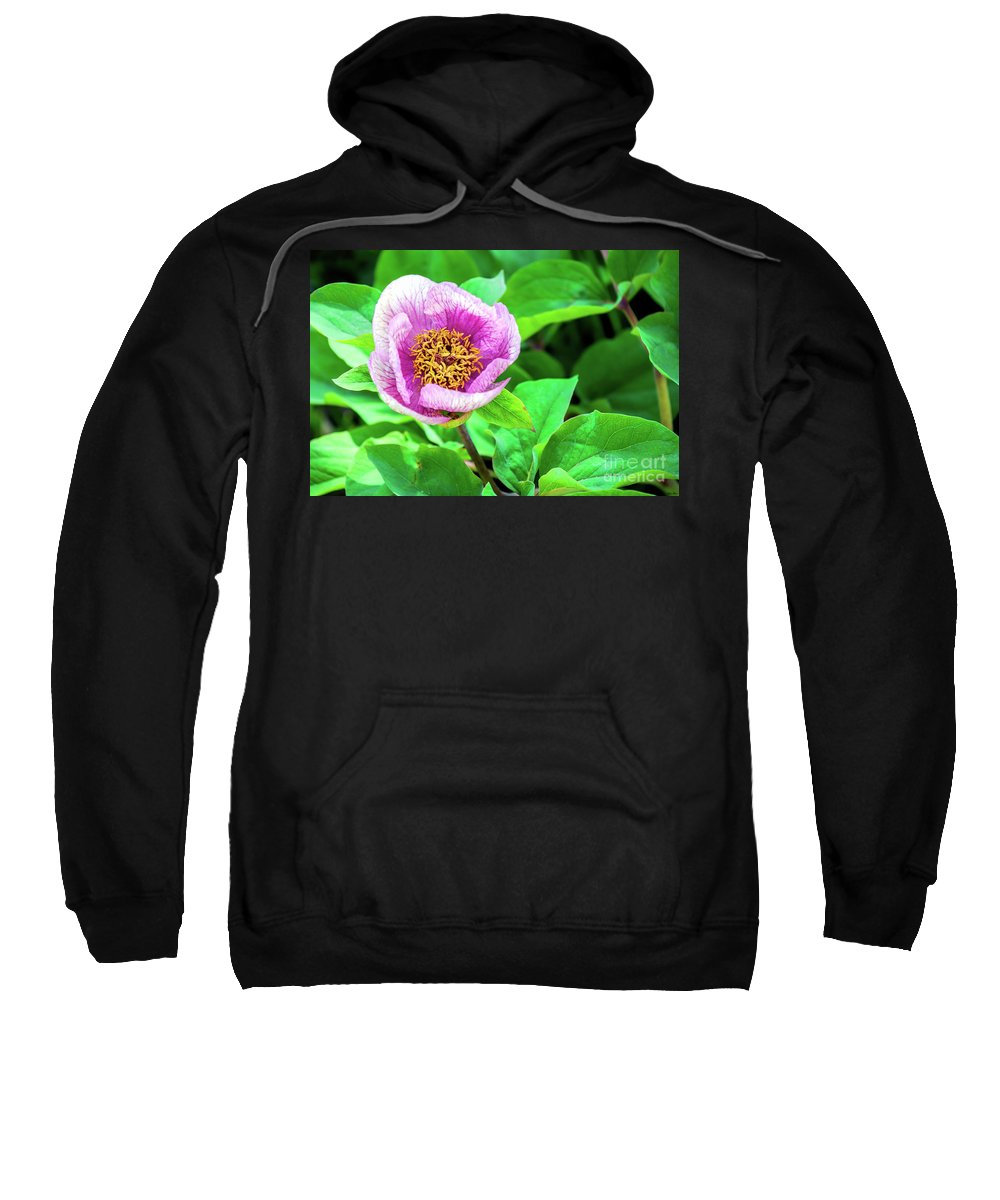 Pink And Yellow Flower Sweatshirt featuring the photograph Pink And Yellow Flower by Charles Abrams