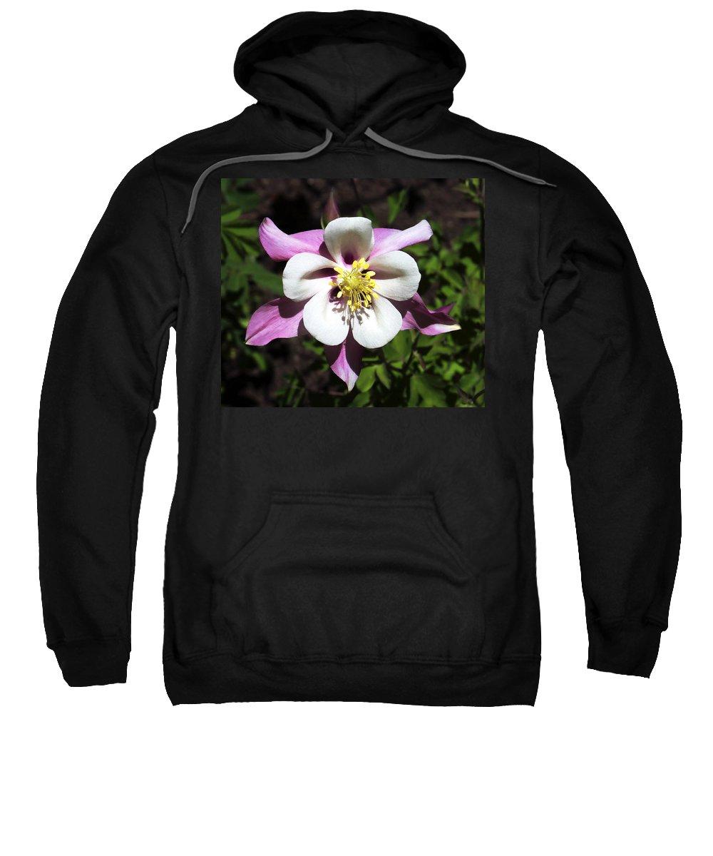 Columbine Sweatshirt featuring the photograph Pink Columbine by Marilyn Hunt