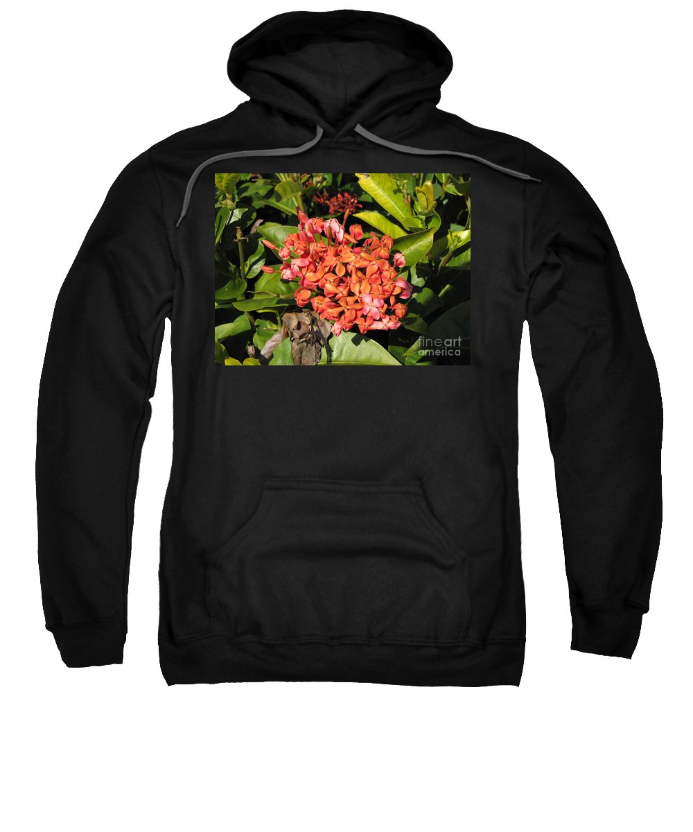 Flowers Sweatshirt featuring the photograph Pink Flower by Michelle Powell