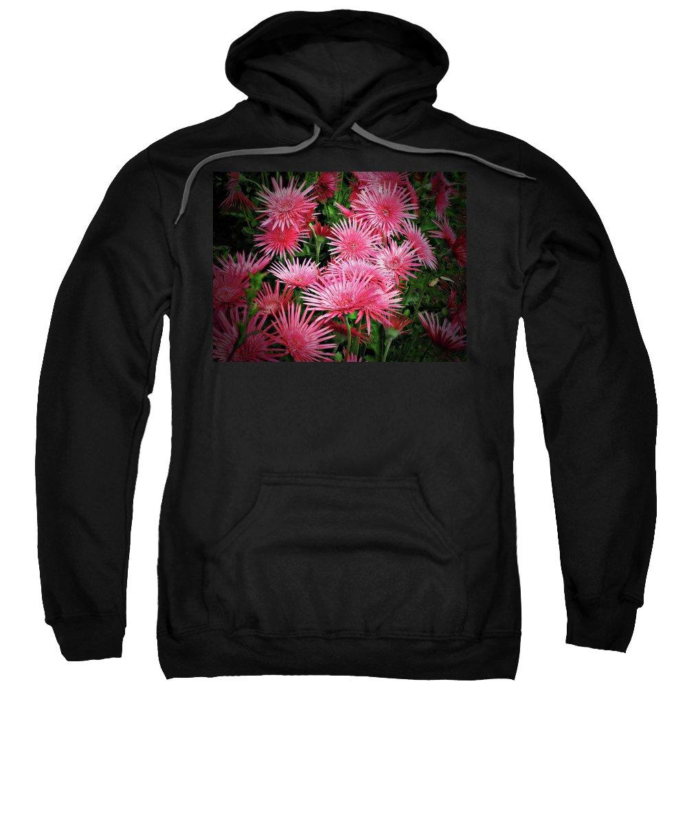 Gerbera Sweatshirt featuring the photograph Pink Gerbera Heaven by Douglas Barnard