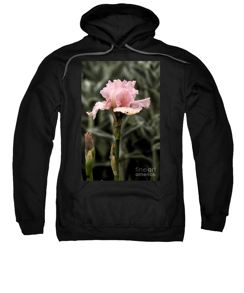 Pink Sweatshirt featuring the photograph Pink Iris by Jim And Emily Bush