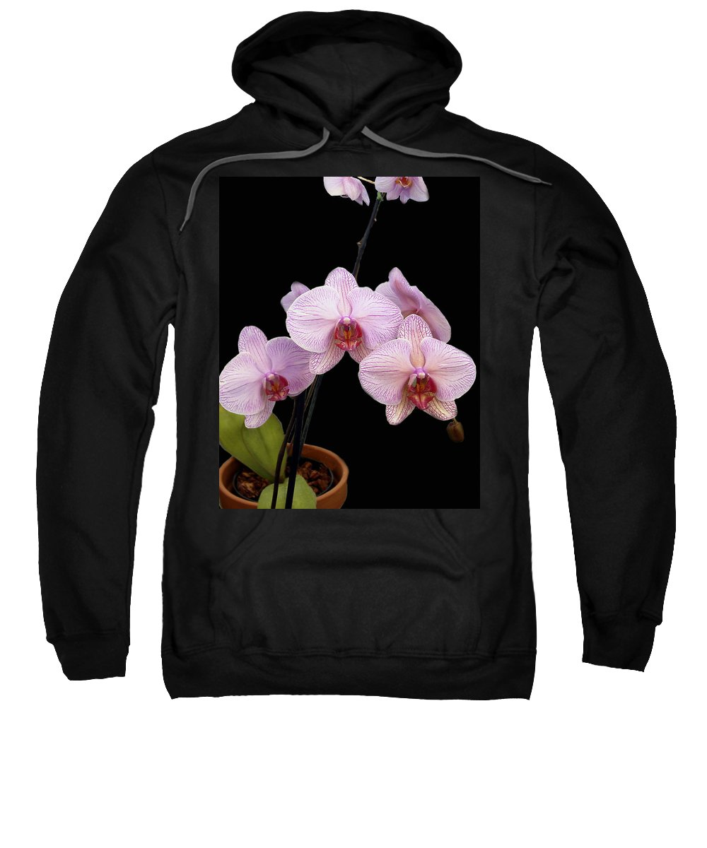 Flowers Sweatshirt featuring the photograph Pink Orchids by Kurt Van Wagner