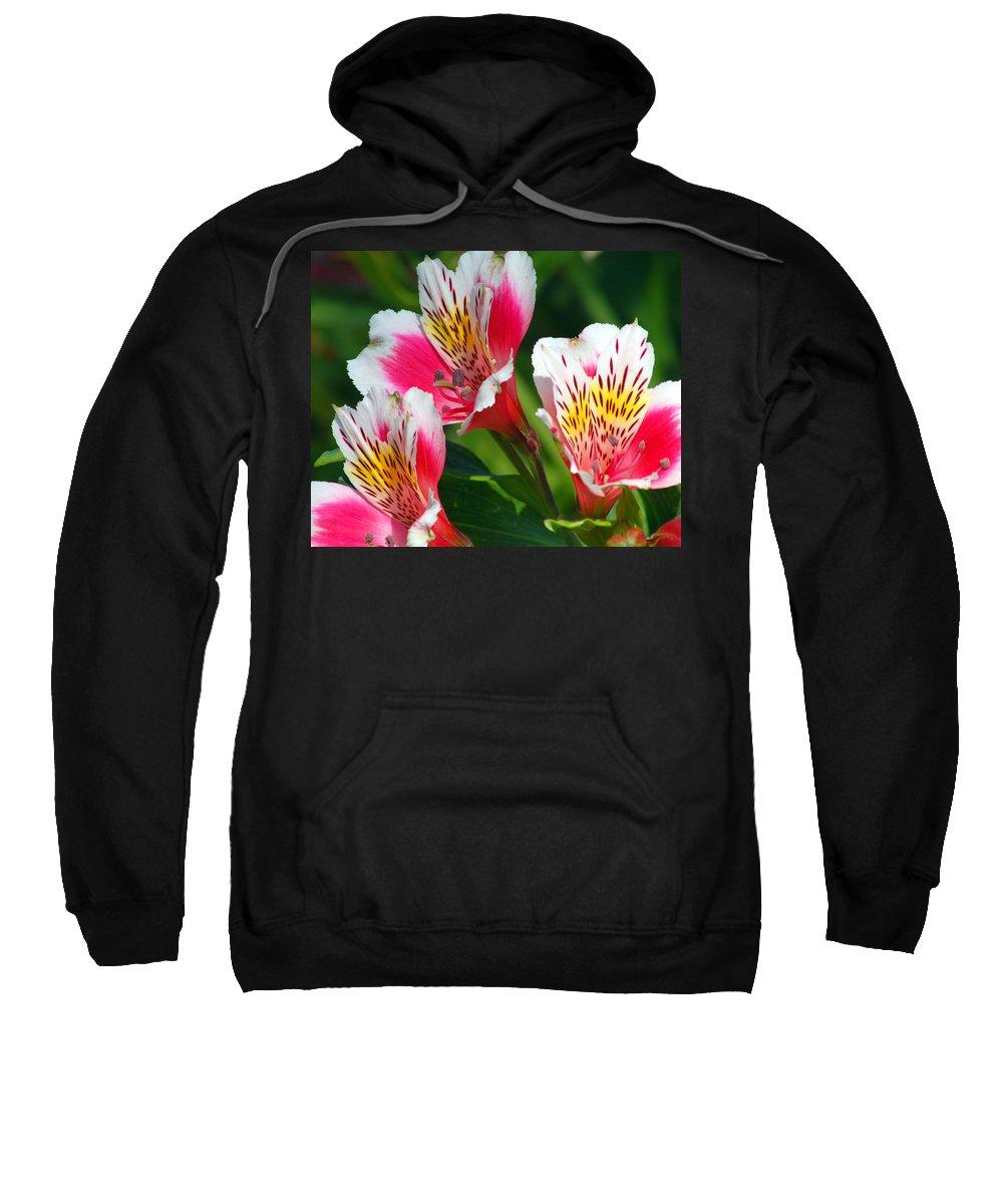Peruvian Sweatshirt featuring the photograph Pink Peruvian Lily 2 by Amy Fose