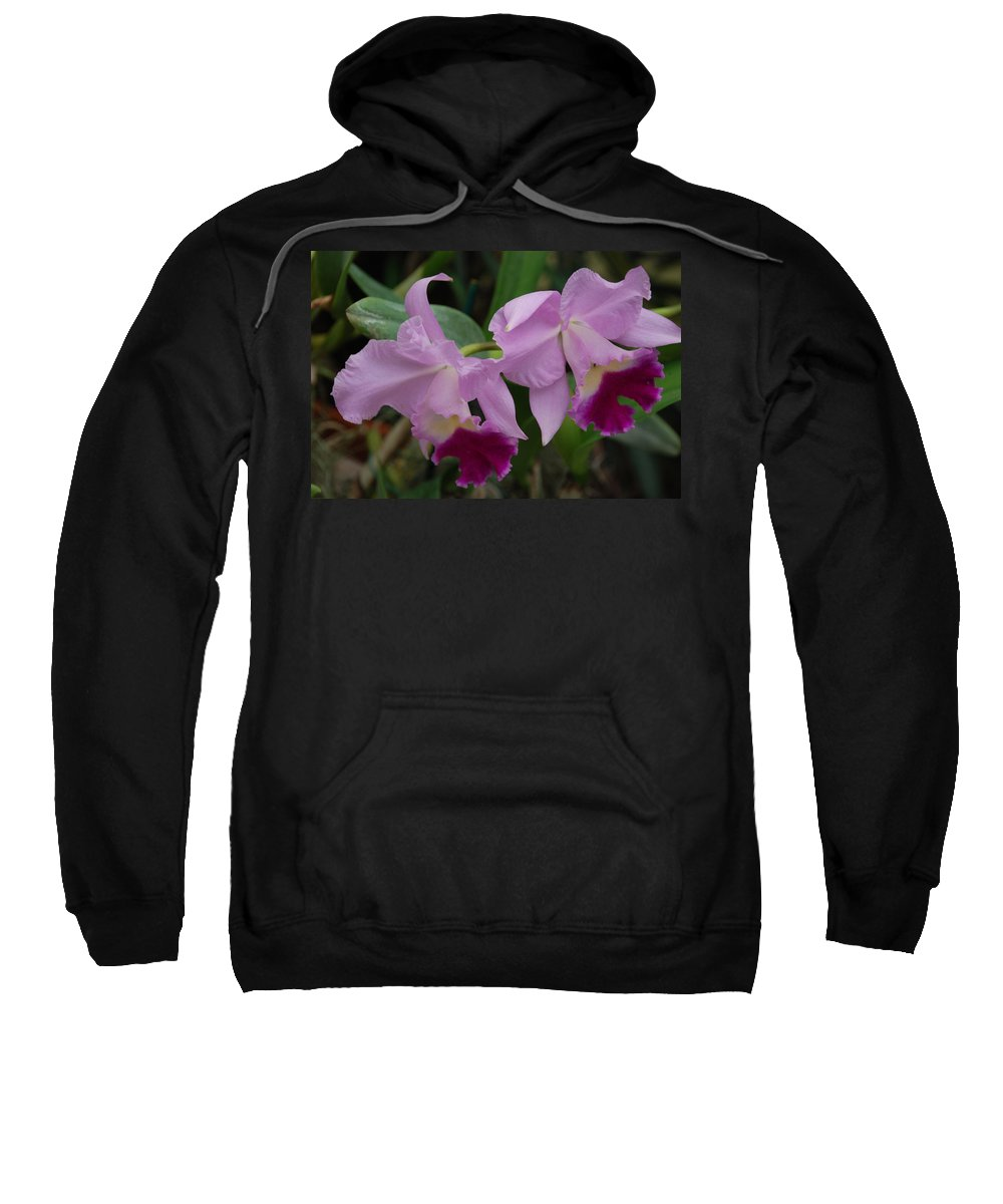 Macro Sweatshirt featuring the photograph Pink Purple Orchids by Rob Hans