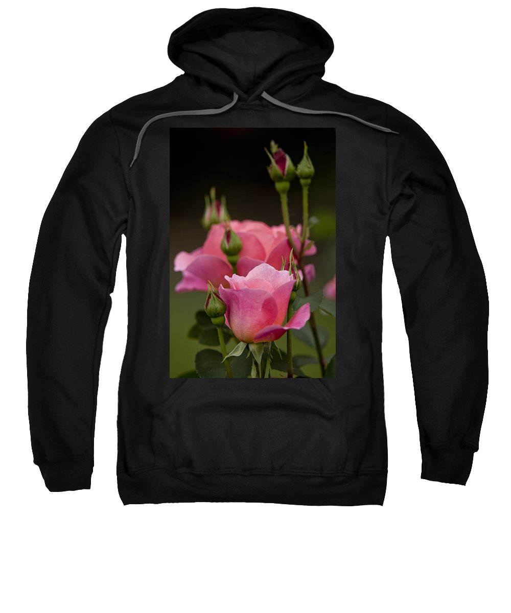 Gardens Sweatshirt featuring the photograph Pink Rose 2 by Michael Cummings