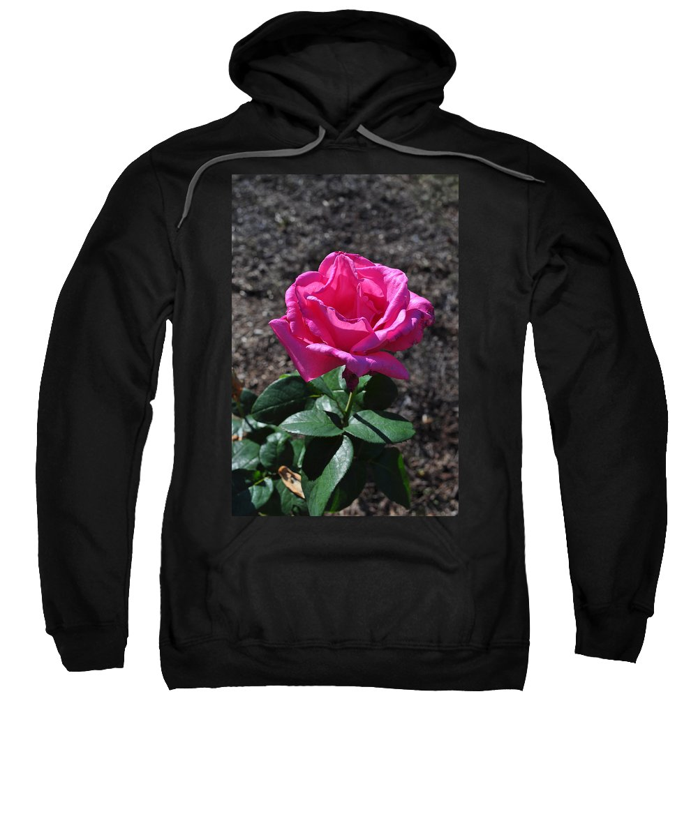 Rose Sweatshirt featuring the photograph Pink Rose by Luke Moore