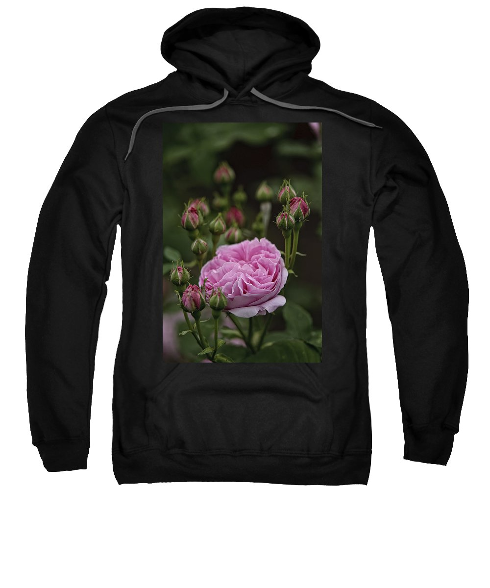Gardens Sweatshirt featuring the photograph Pink Rose by Michael Cummings