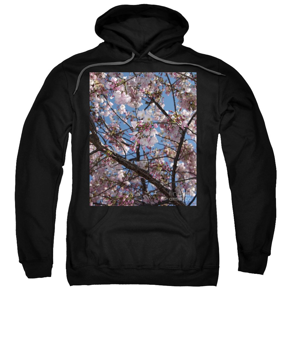 Spring Sweatshirt featuring the photograph Pink Spring Blossoms by Carol Groenen