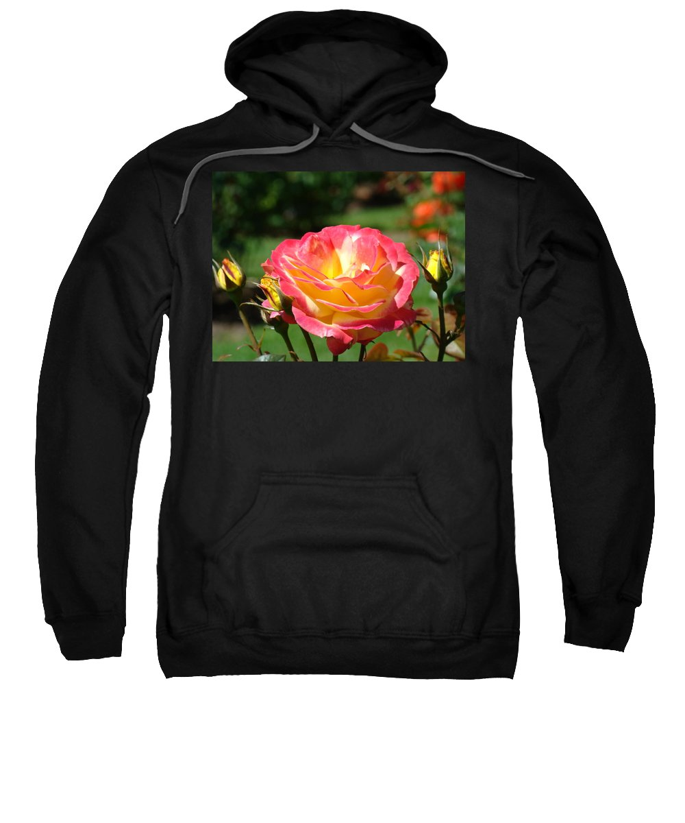 Rose Sweatshirt featuring the photograph Pink Yellow Roses 3 Summer Rose Garden Giclee Art Prints Baslee Troutman by Baslee Troutman