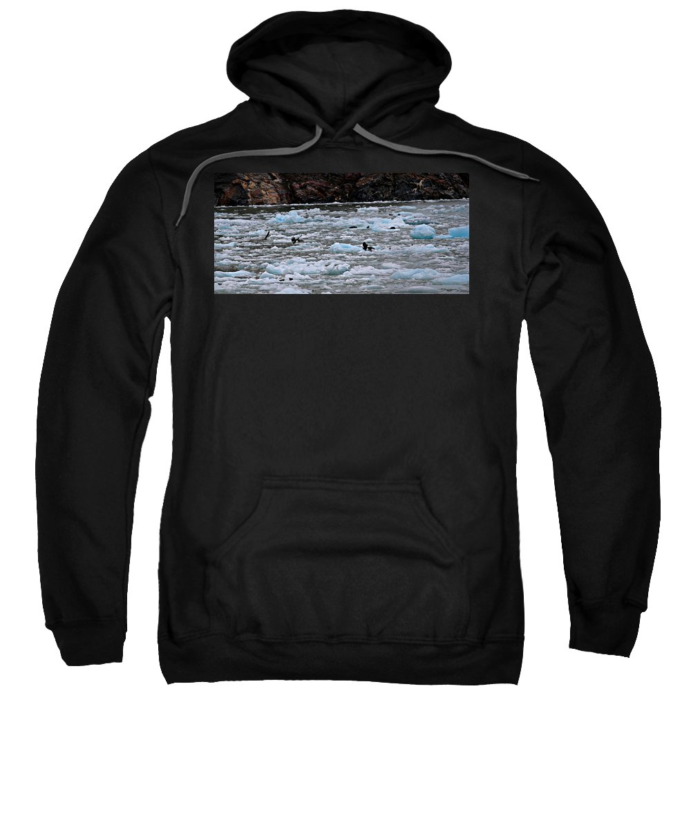 Eagle Sweatshirt featuring the photograph Placental Feed by Gemdelin Jackson