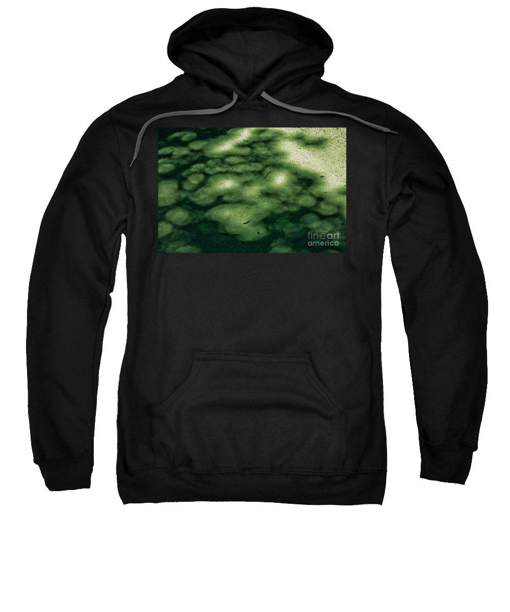 Botanic Garden Sweatshirt featuring the photograph Platanus Hispanica by Casper Cammeraat