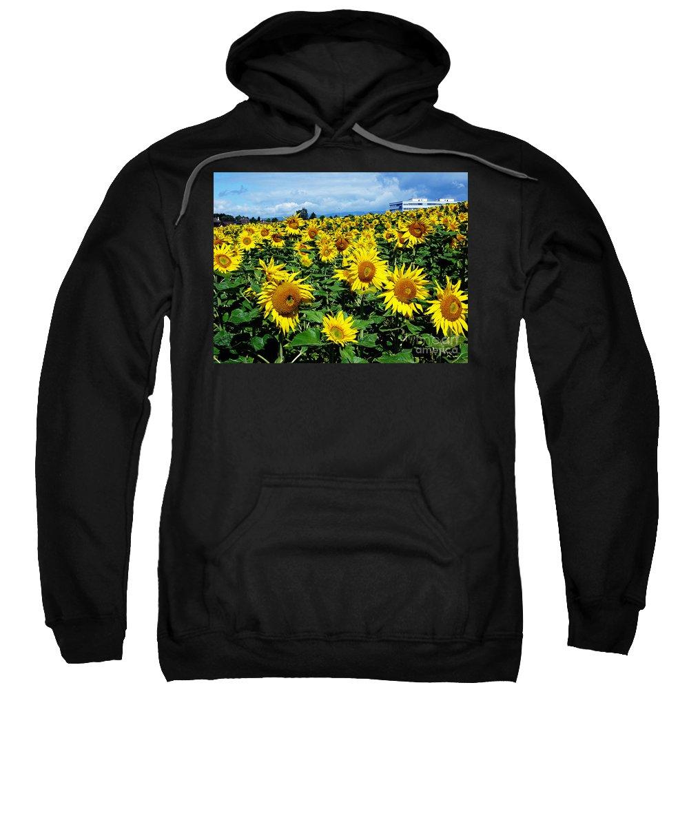 Sunflowers Sweatshirt featuring the photograph Pleasant Warmth by Jeff Barrett