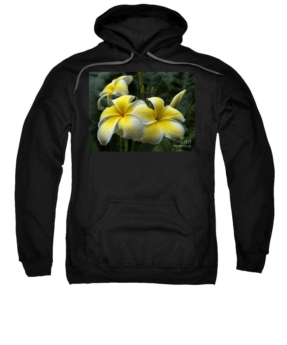 Plumeria Sweatshirt featuring the photograph Plumeria by Ann Horn