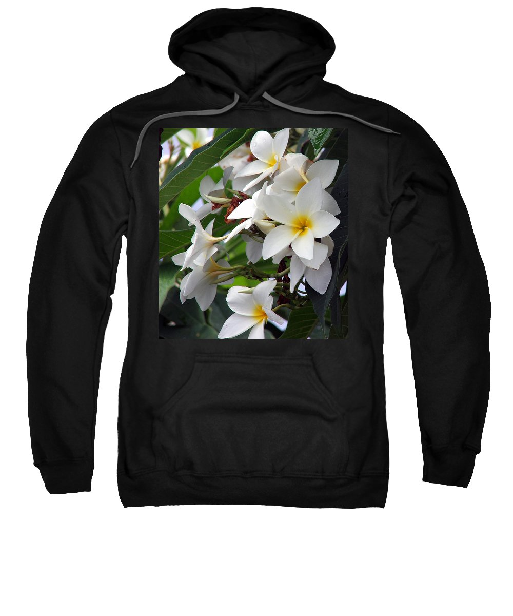 Flower Sweatshirt featuring the photograph Plumeria by Robert Meanor