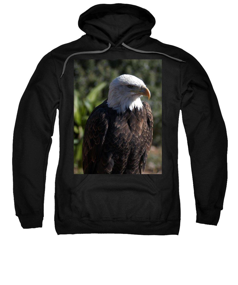 Eagle Sweatshirt featuring the photograph Portrait Bald Eagle by Cliff Norton