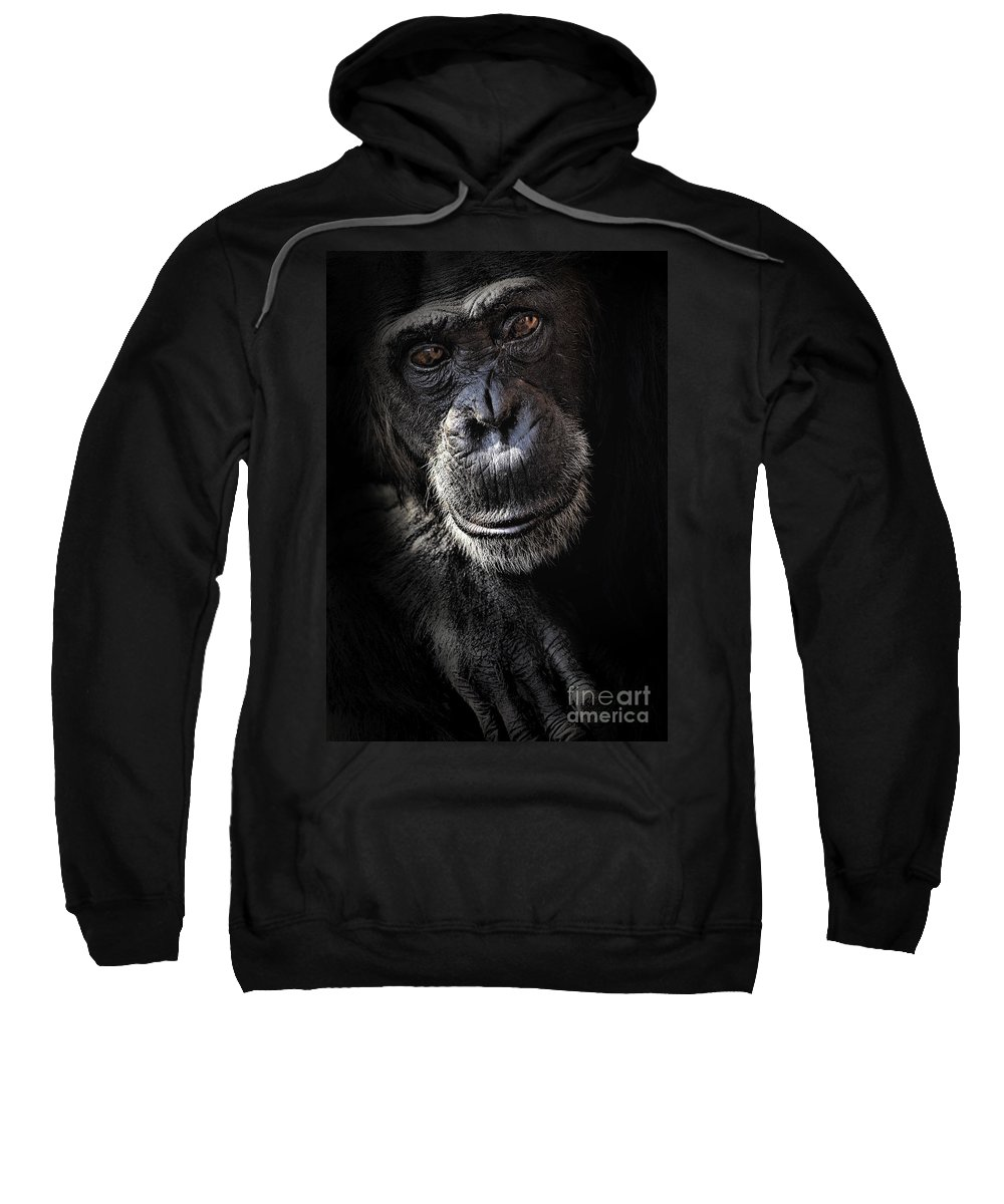 Chimp Sweatshirt featuring the photograph Portrait Of A Chimpanzee by Sheila Smart Fine Art Photography
