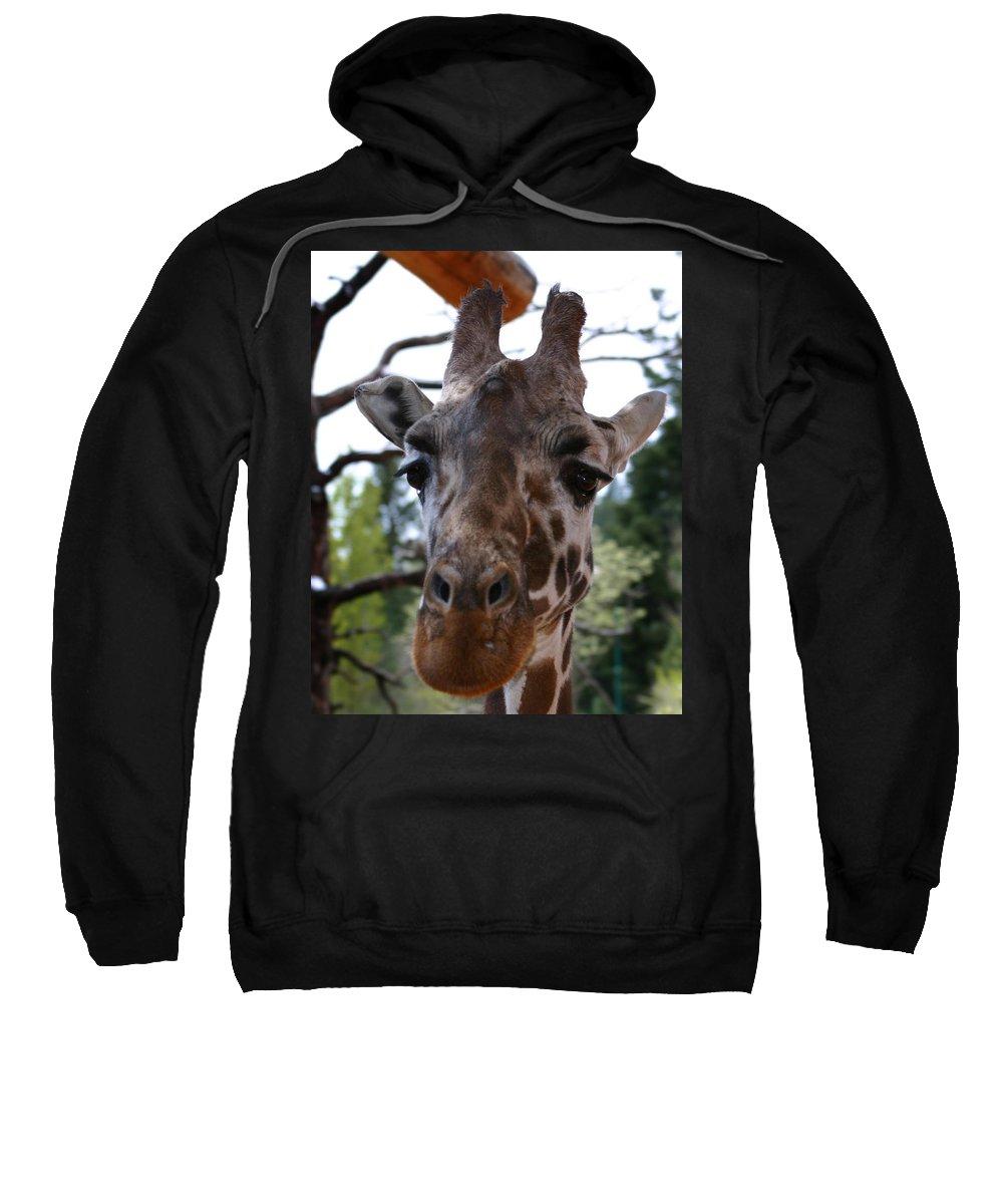 Giraffe Sweatshirt featuring the photograph Portrait Of A Giraffe by Anthony Jones