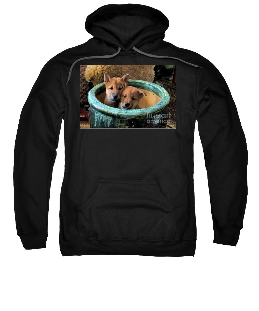 A Pair Of Red Inu Shiba Puppies Sweatshirt featuring the photograph Potted Puppies by Expressionistart studio Priscilla Batzell