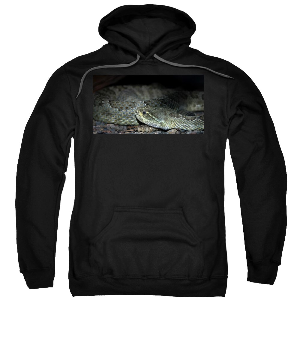 Snake Sweatshirt featuring the photograph Prarie Rattle Snake by Anthony Jones