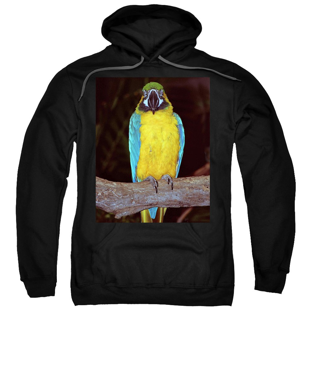 Amazon Sweatshirt featuring the photograph Pretty Bird by Gary Adkins
