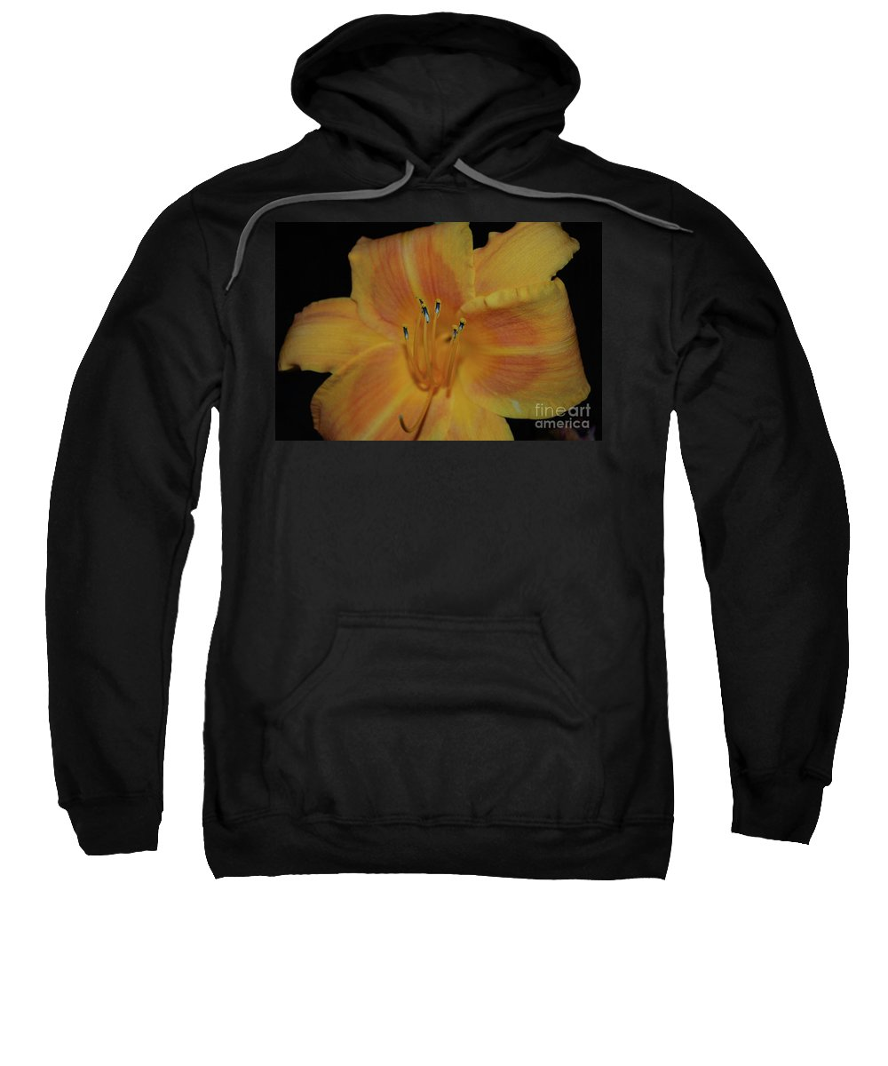Lily Sweatshirt featuring the photograph Pretty Orange Daylily Flowering With Pollen On It's Stamen by DejaVu Designs