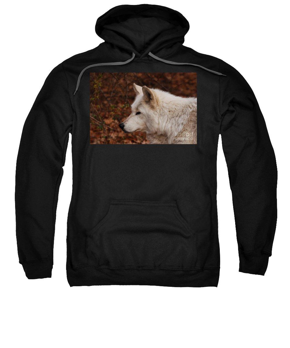 Wolf Sweatshirt featuring the photograph Pretty Profile by Lori Tambakis