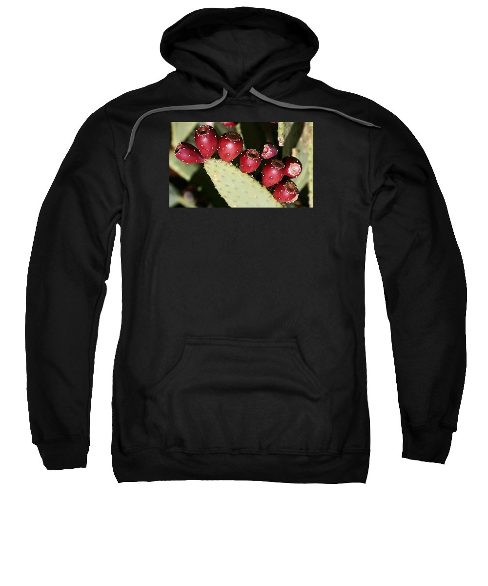 Plant Sweatshirt featuring the photograph Prickly Pear-jerome Arizona by Nelson Strong