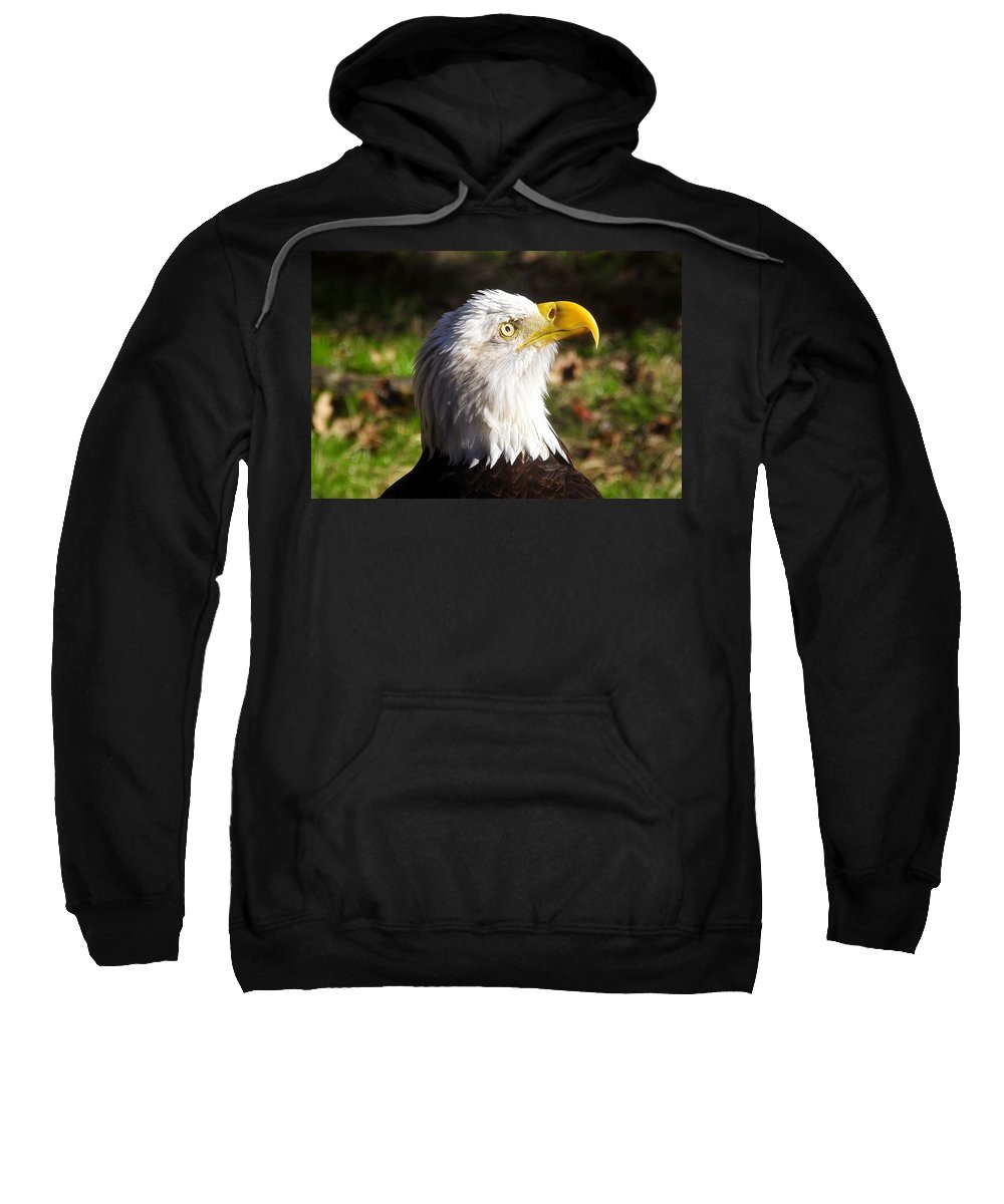 American Bald Eagle Sweatshirt featuring the photograph Proud Eagle by David Lee Thompson