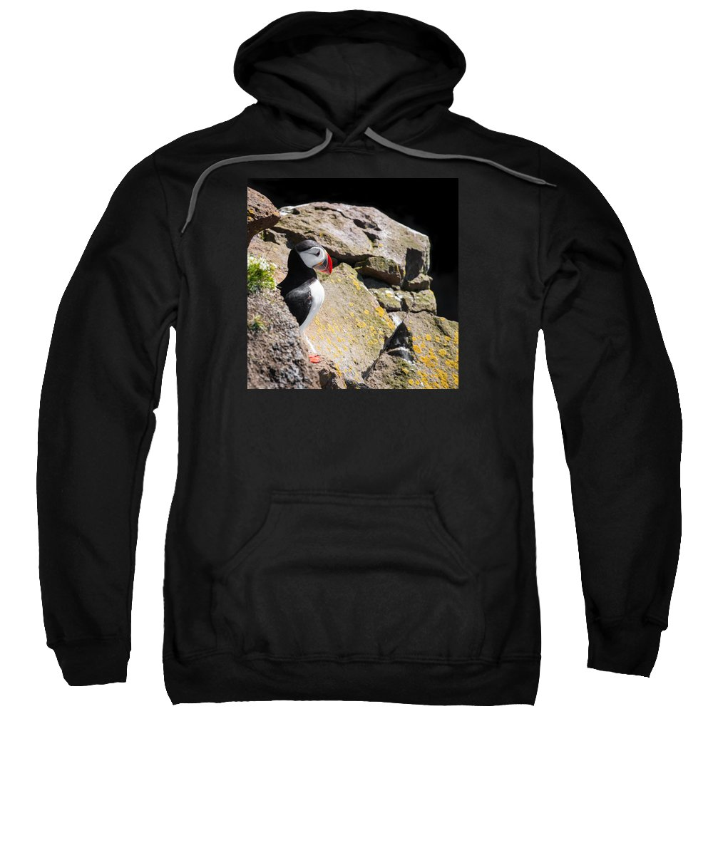Puffin Sweatshirt featuring the photograph Puffin And Rocks by Matthias Hauser