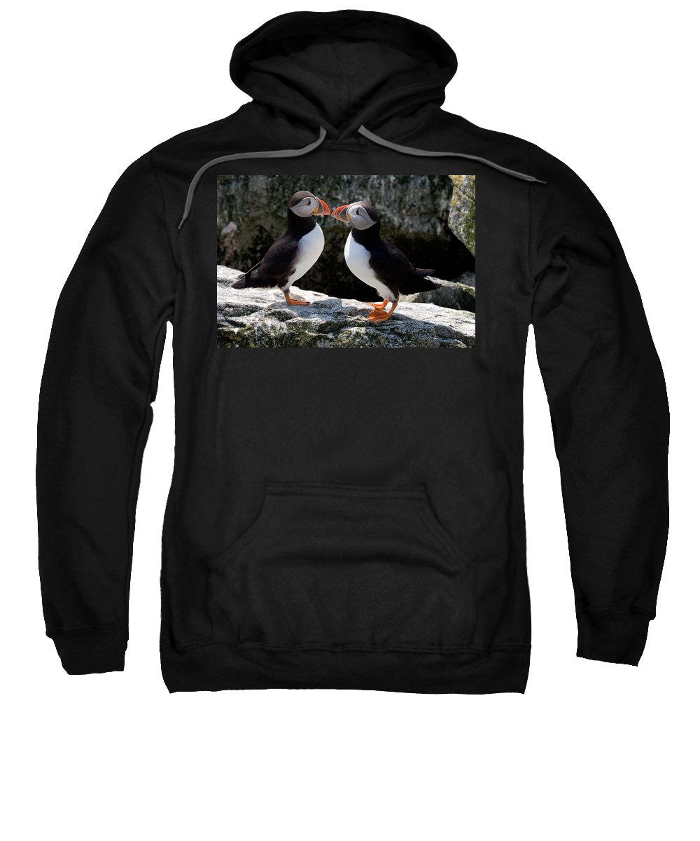 Puffin Sweatshirt featuring the photograph Puffin Love by Brent L Ander