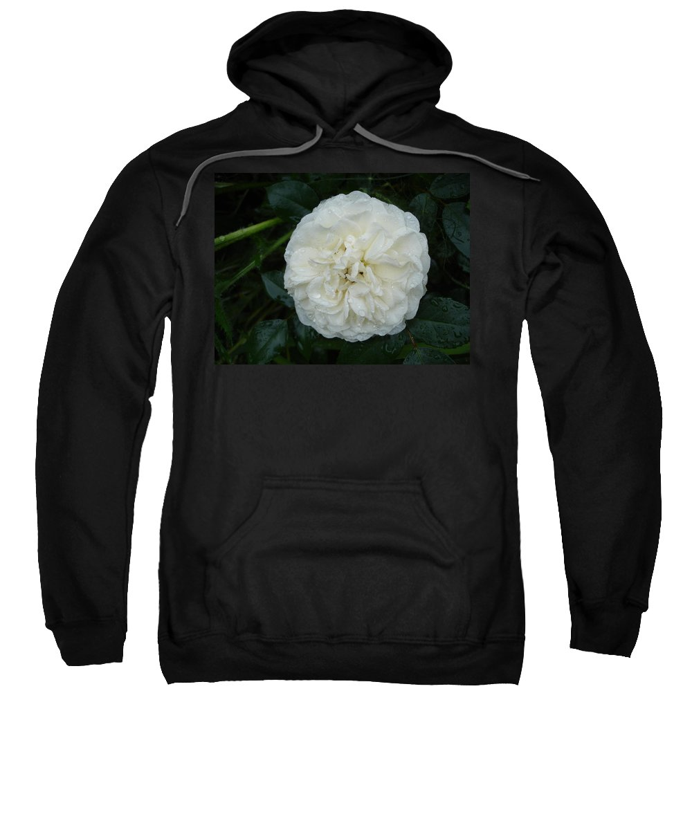 Rose Sweatshirt featuring the photograph Purity And Perfection by Susan Baker
