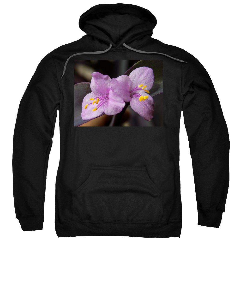 House Plants Sweatshirt featuring the photograph Purple Purple And Yellow by William Tasker